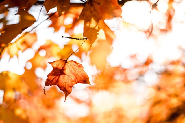 Rain, Cooler Temperatures – It's Fall in the South